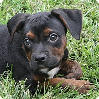 Adopt A Pet :: Hunter - North Olmsted, OH