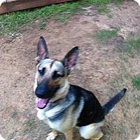 Adopt A Pet :: Layla - Bowie, TX