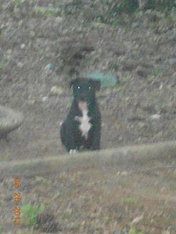 Labrador Retriever Mix Dog for adoption in Loganville, Georgia - Barley