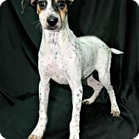 Adopt A Pet :: Haz - Lufkin, TX
