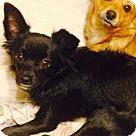 Adopt A Pet :: Saki