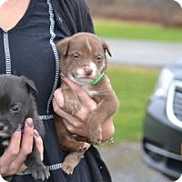 Adopt A Pet :: Missy - ROME, NY