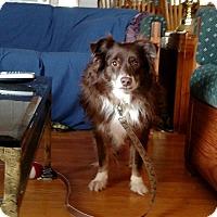 Adopt A Pet :: Zach - Courtesy listing - Gig Harbor, WA