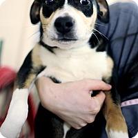 Adopt A Pet :: Rufus - Appleton, WI