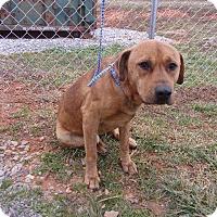 Adopt A Pet :: Lanny - Springfield, TN