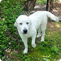 Adopt A Pet :: Ben Kingsley - Enfield, CT