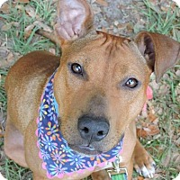 Adopt A Pet :: Mila - Gainesville, FL