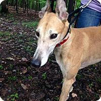Adopt A Pet :: P Kay Reelz - Gerrardstown, WV