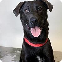 Adopt A Pet :: Redwood - Rockwall, TX