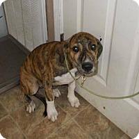 Adopt A Pet :: Hamilton - Lewisburg, TN