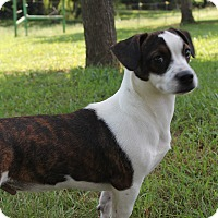Adopt A Pet :: Petey (has been adopted) - Trenton, NJ