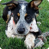 Adopt A Pet :: Froakey ~ ADOPTED! - Creston, OH