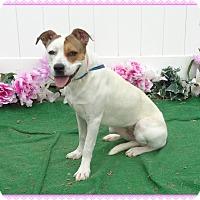 Boxer Mix Dog for adoption in Marietta, Georgia - MIA-volunteer fave-see video