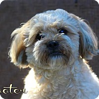 Adopt A Pet :: Scooter - Benton, LA