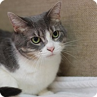 Adopt A Pet :: Mrs. Richard Gere - Midland, MI
