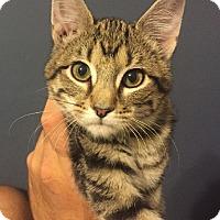 Adopt A Pet :: Sanford - Overland Park, KS