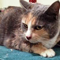 Adopt A Pet :: Henny Penny - Orange, CA