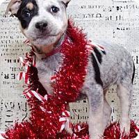 Adopt A Pet :: 1035 - Aurora, CO