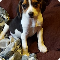 Adopt A Pet :: Cooper - Cleveland, OH