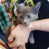 Adopt A Pet :: Kennedy - Cerritos, CA