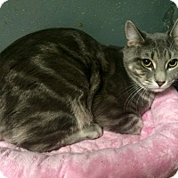 Adopt A Pet :: Tyrion in CT - Manchester, CT