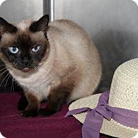 Adopt A Pet :: Ciara - Orland Park, IL