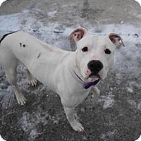 Adopt A Pet :: NOM NOMS - Brooklyn, NY