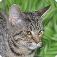 Adopt A Pet :: Bows - Englewood, FL