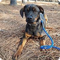 Adopt A Pet :: Kevin - Macon, GA