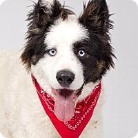 Adopt A Pet :: MS. VALENTINE - Pt. Richmond, CA