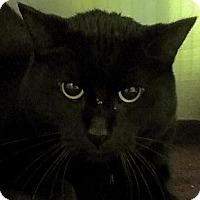 Adopt A Pet :: Jinxy - Richboro, PA