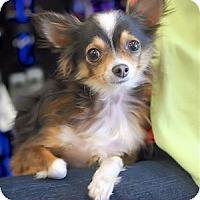 Adopt A Pet :: Samson - Mooy, AL