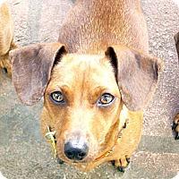Adopt A Pet :: Chloe - San Jose, CA