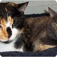 Adopt A Pet :: Snickers & Smokey - St. Louis, MO
