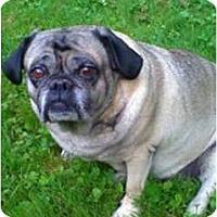 Adopt A Pet :: Daisy - Avondale, PA