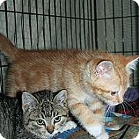 Adopt A Pet :: Antonio - Santa Rosa, CA