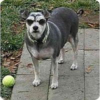 Adopt A Pet :: Tessey - Meridian, ID