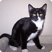 Adopt A Pet :: K-Sitka2-Babycakes - Colorado Springs, CO