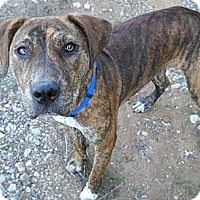 Adopt A Pet :: Bundle - Flatonia, TX