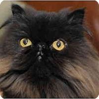 Adopt A Pet :: Lancelot - Columbus, OH