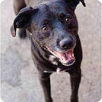Adopt A Pet :: Tux - Portland, OR