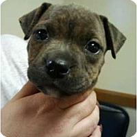 Adopt A Pet :: Pancho - Orlando, FL