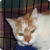 Adopt A Pet :: Oshe - Fort Lauderdale, FL