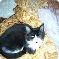 Adopt A Pet :: *Male Kittens - Winder, GA