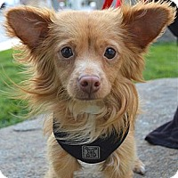 Adopt A Pet :: Alfie - Los Angeles, CA