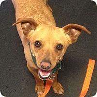 Adopt A Pet :: Mozart - Redondo Beach, CA