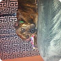 Adopt A Pet :: Nala, an exceptional dog - Sacramento, CA