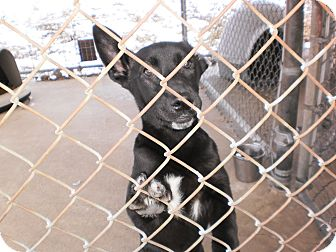 Labrador Retriever Mix Puppy for adoption in Wallaceburg, Ontario - Bubbles