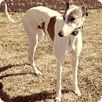 Adopt A Pet :: Penske - Florence, KY