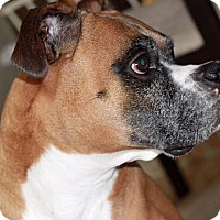 Adopt A Pet :: Mariner - Surrey, BC